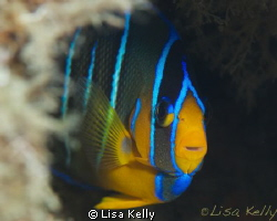 This fish was happy to pose while I practice my macro skills by Lisa Kelly 